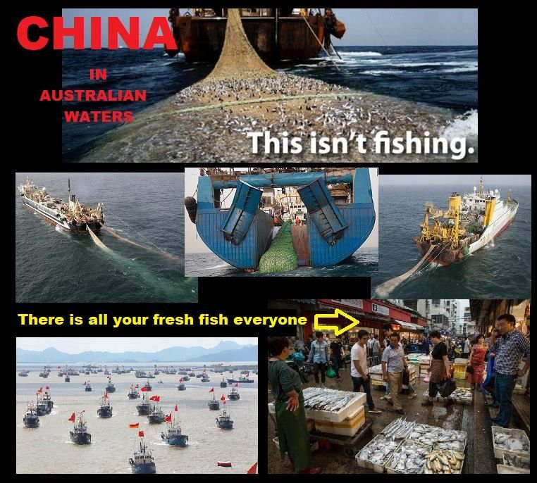 Now, lets think...Why on earth would sharks start trying to eat people when there has been no problem in the past?Can you think what the problem may be?https://www.abc.net.au/news/2016-09-06/spike-in-illegal-fishing-australian-waters-rising-asian-tension/7819024?fbclid=IwAR0bJyesIwCWWRoTcNJVSBHMEac-FvlTIKqKREGzacCambyC1uBykIaCSN4https://www.abc.net.au/news/2018-09-30/china-super-trawlers-overfishing-world-oceans/10317394?fbclid=IwAR0qN5KB8LwnyxKO2w84JlI3g0AmELbBIyTls4OU470AyIBUDjy92sE4sgM